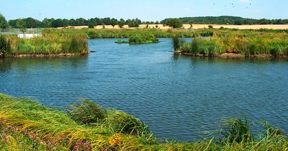stormwater treatment by constructed wetlands