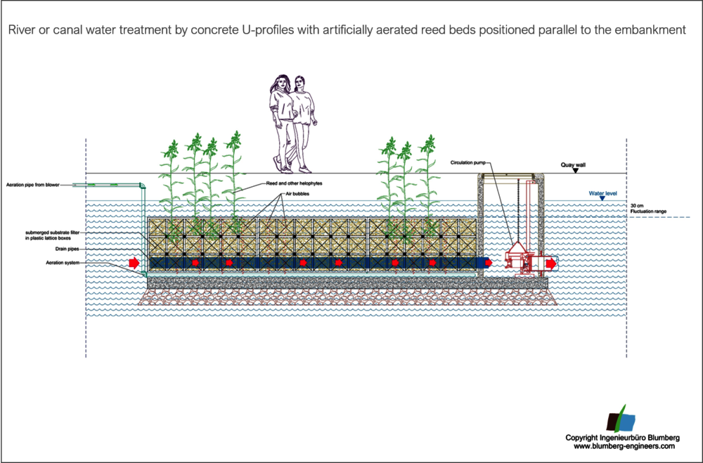 technical river bank filtration system with reeds and marsh plants