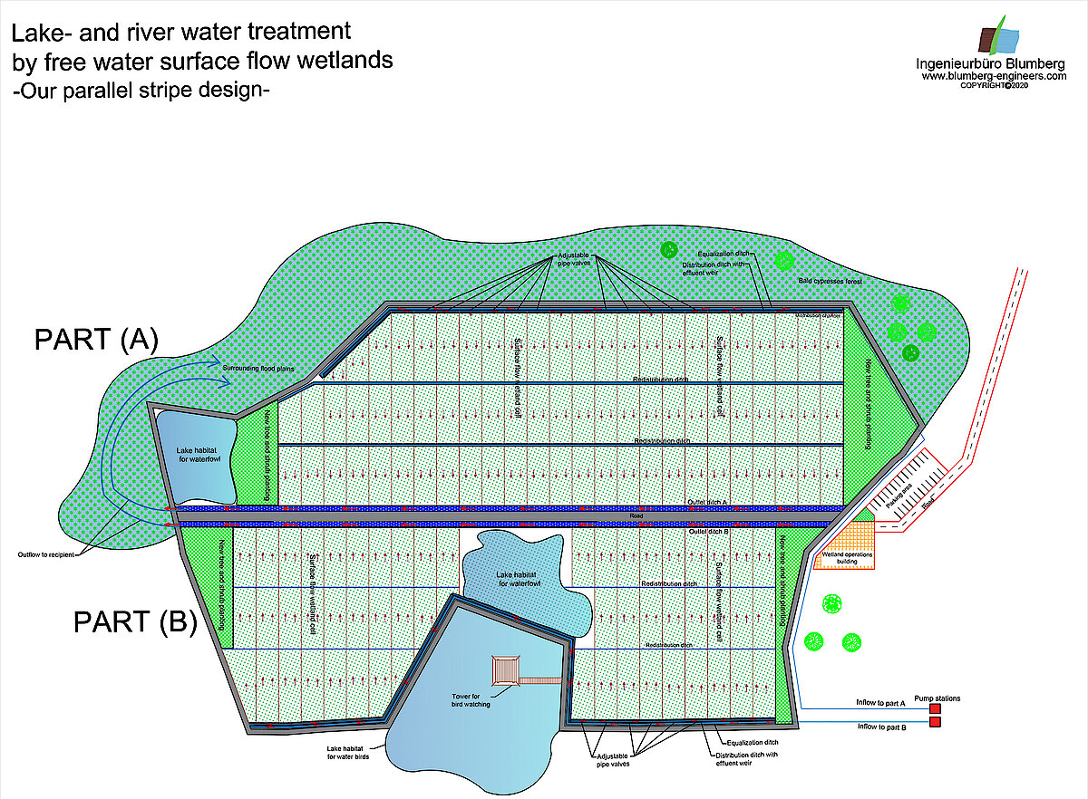 parallel design free water surface flow wetlands for water treatment of lakes or rivers with marsh plants