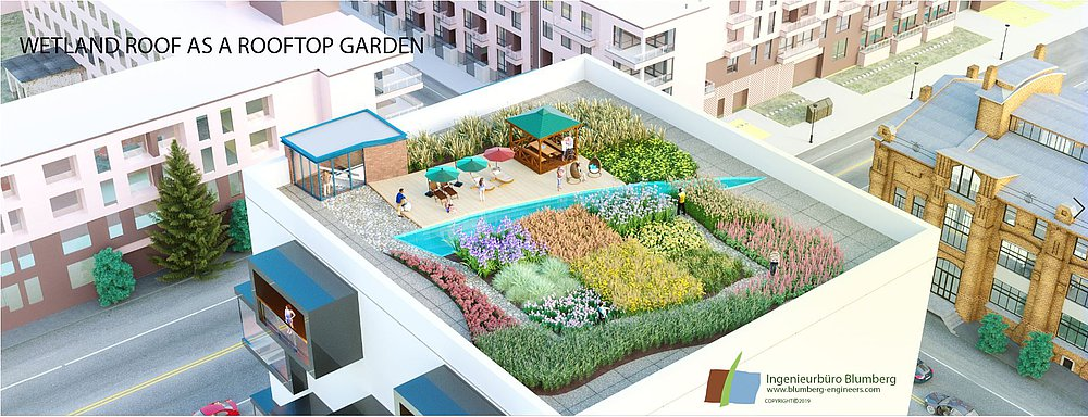 Roof planting concept with wetland plants